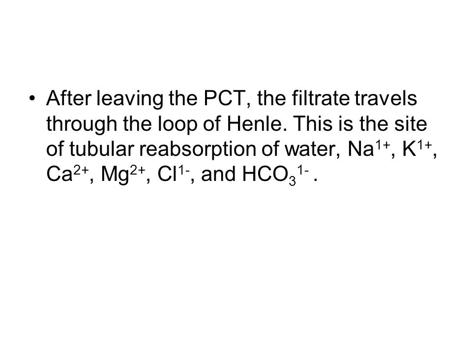 After leaving the PCT, the filtrate travels through the loop of Henle.
