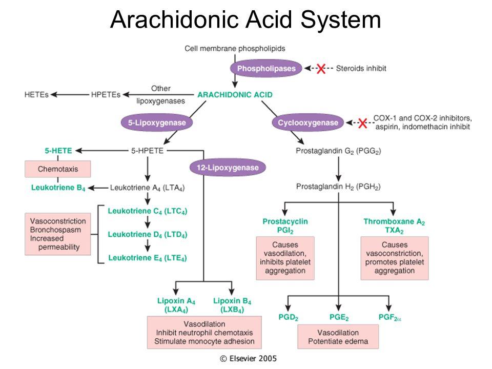 Arachidonic Acid System