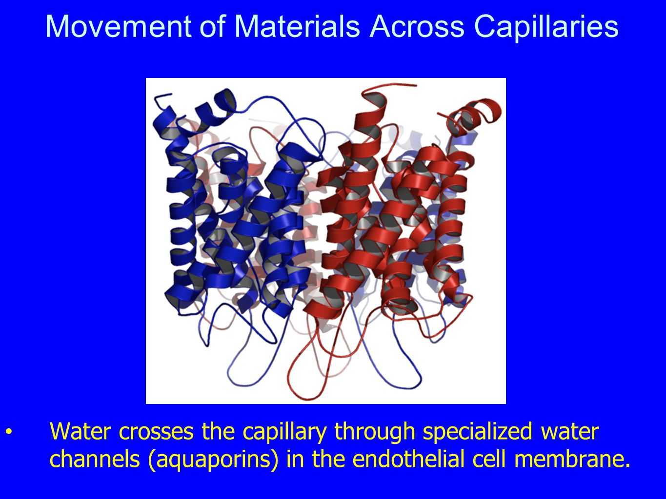 Movement of Materials Across Capillaries Water crosses the capillary through specialized water channels (aquaporins) in the endothelial cell membrane.