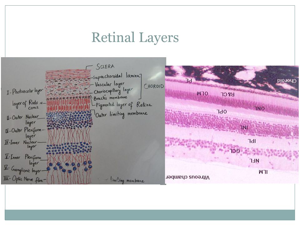 Retinal Layers