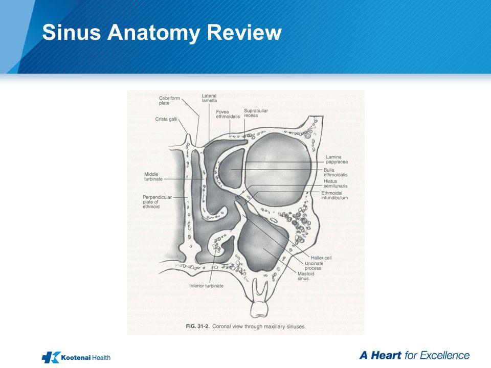 Sinus Anatomy Review