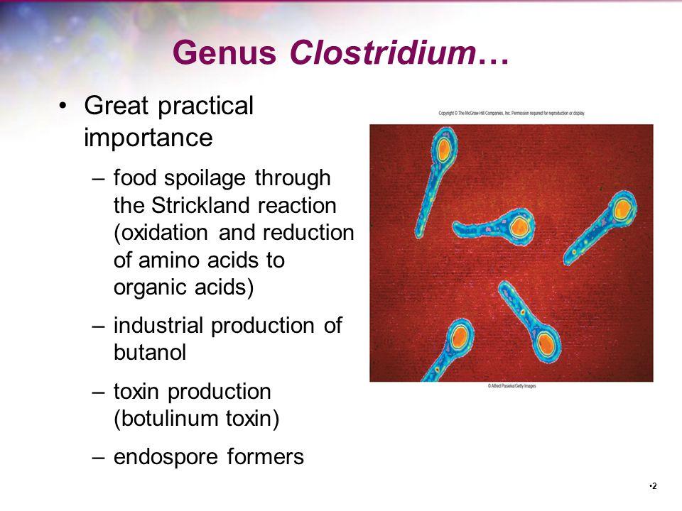 Important Species of Clostridium C.botulinum –food spoilage (especially canned foods); botulism C.