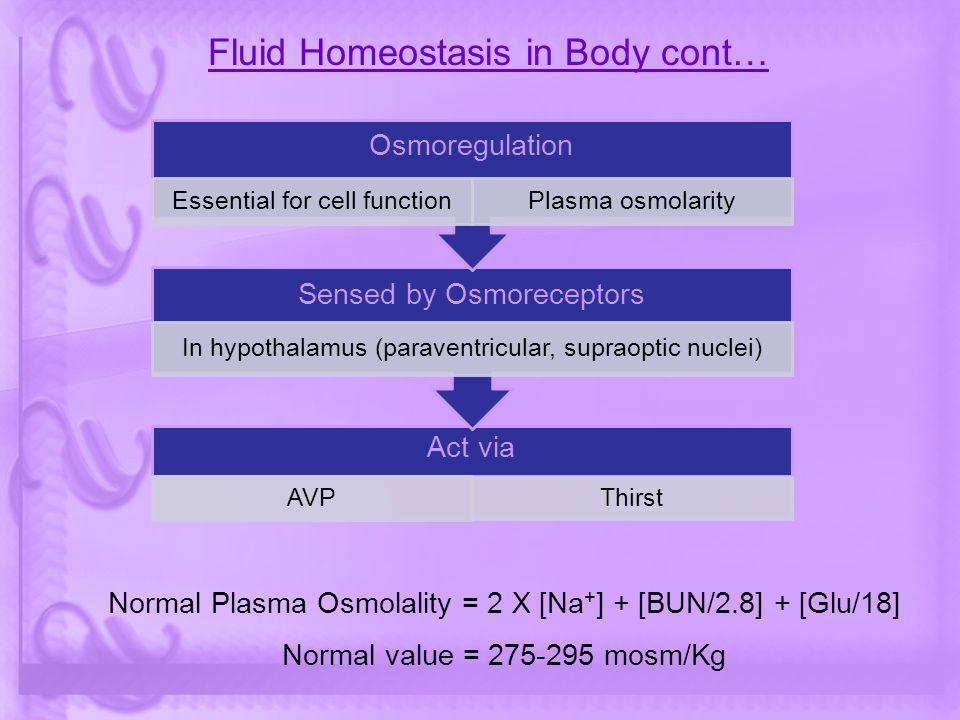 Fluid Homeostasis in Body cont… Act via AVP Thirst Sensed by Osmoreceptors In hypothalamus (paraventricular, supraoptic nuclei) Osmoregulation Essenti
