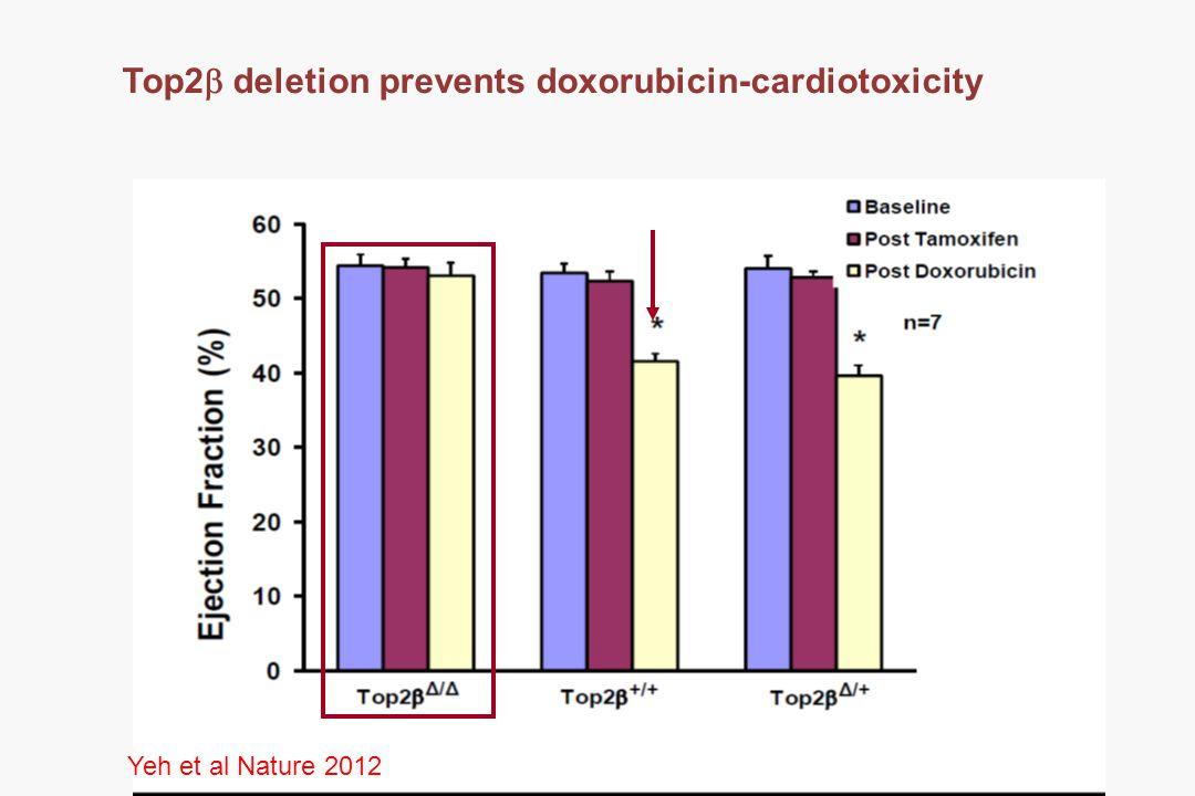 Top2  deletion prevents doxorubicin-cardiotoxicity Yeh et al Nature 2012