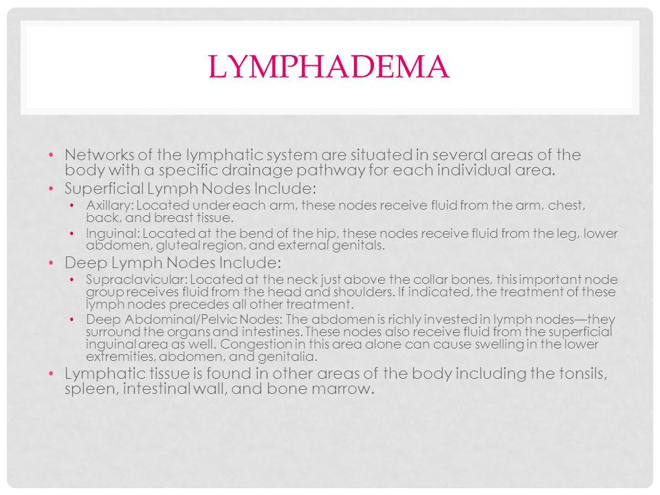 NORMAL LYMPHATICS.