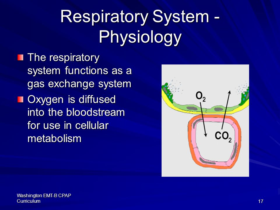 Washington EMT-B CPAP Curriculum17 Respiratory System - Physiology The respiratory system functions as a gas exchange system Oxygen is diffused into the bloodstream for use in cellular metabolism