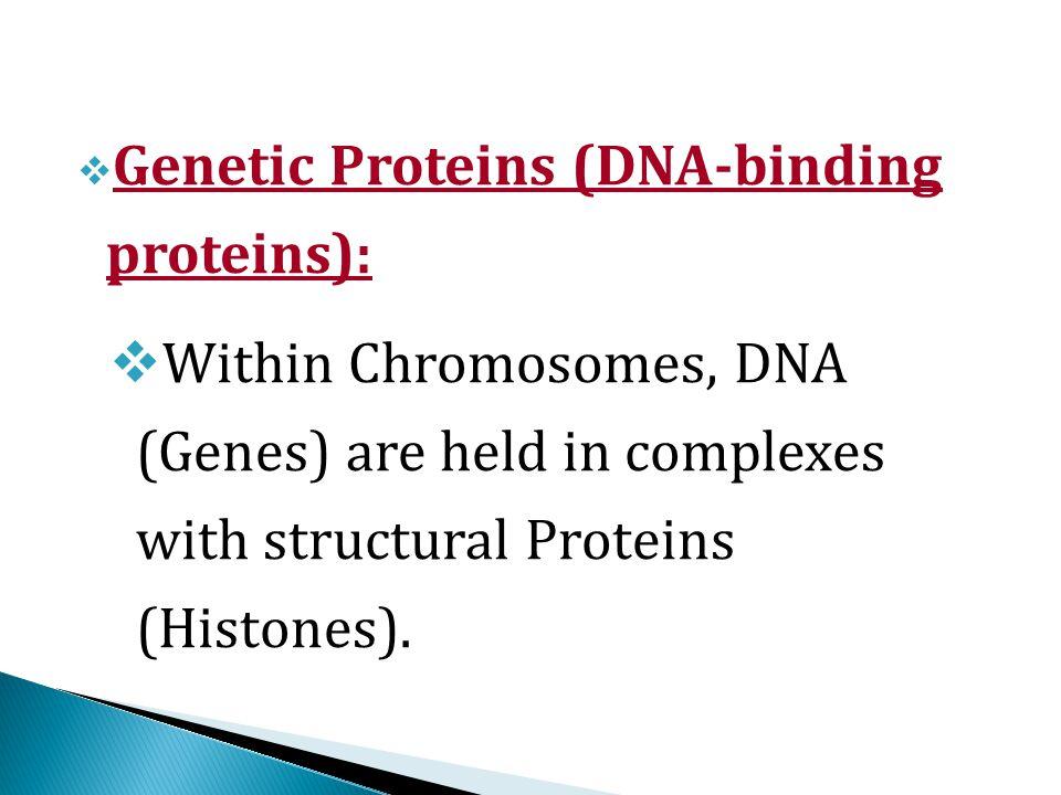DNA (Gene) Enzyme ProteinHormone Structural element