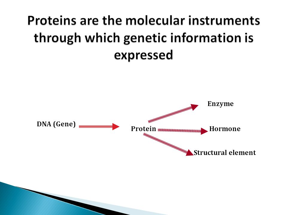  Enzymes determine the functions:  Enzymes are Powerful catalysts for biological reactions.