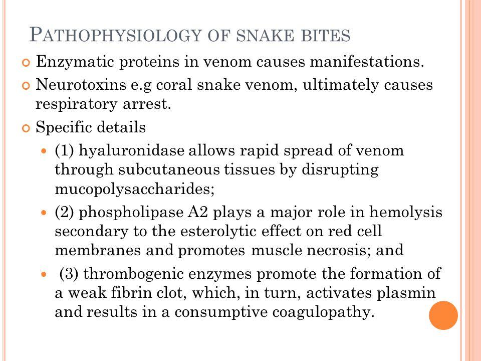P ATHOPHYSIOLOGY OF SNAKE BITES Enzymatic proteins in venom causes manifestations. Neurotoxins e.g coral snake venom, ultimately causes respiratory ar