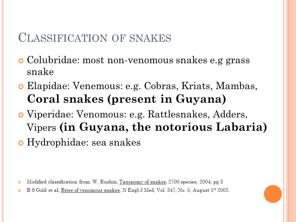 C LASSIFICATION OF SNAKES Colubridae: most non-venomous snakes e.g grass snake Elapidae: Venemous: e.g. Cobras, Kriats, Mambas, Coral snakes (present