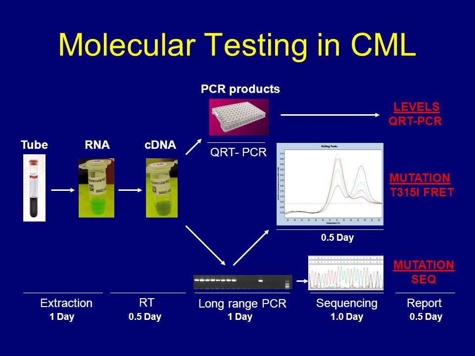 Molecular Testing in CML TubeRNAcDNA PCR products 1 Day ReportExtraction RT 1 Day Sequencing 1.0 Day 0.5 Day Long range PCR QRT- PCR 0.5 Day LEVELS QR
