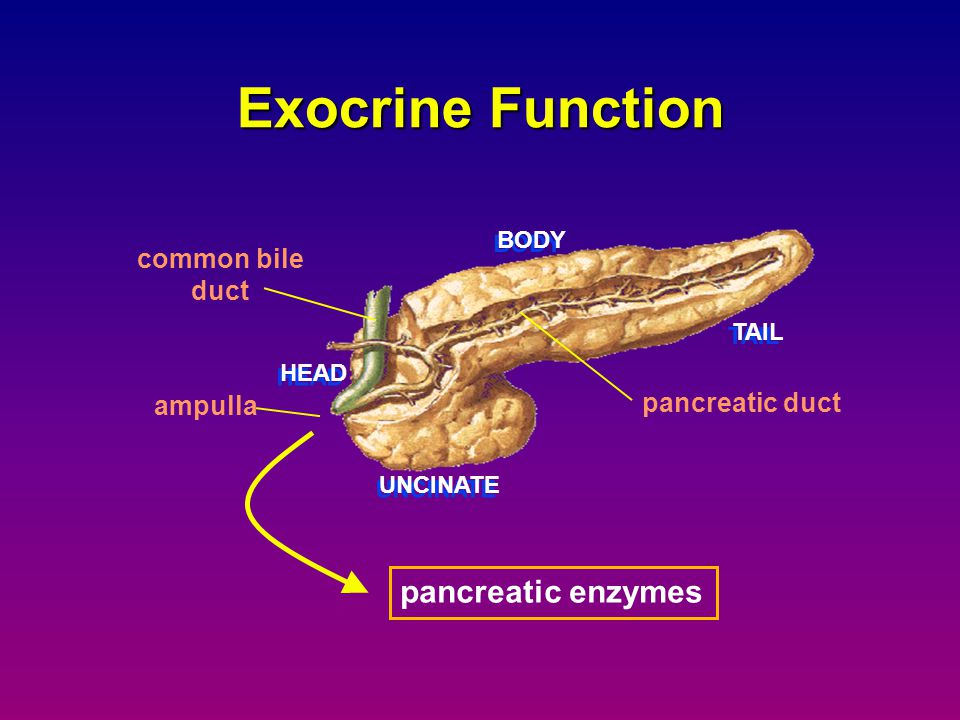 autodigestion of pancreatic tissue release of enzymes into the circulation activation of white blood cells local complications local vascular insufficiency premature enzyme activation distant organ failure Acute Pancreatitis Pathogenesis