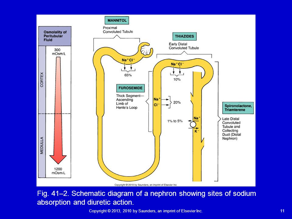 11Copyright © 2013, 2010 by Saunders, an imprint of Elsevier Inc. Fig. 41–2. Schematic diagram of a nephron showing sites of sodium absorption and diu