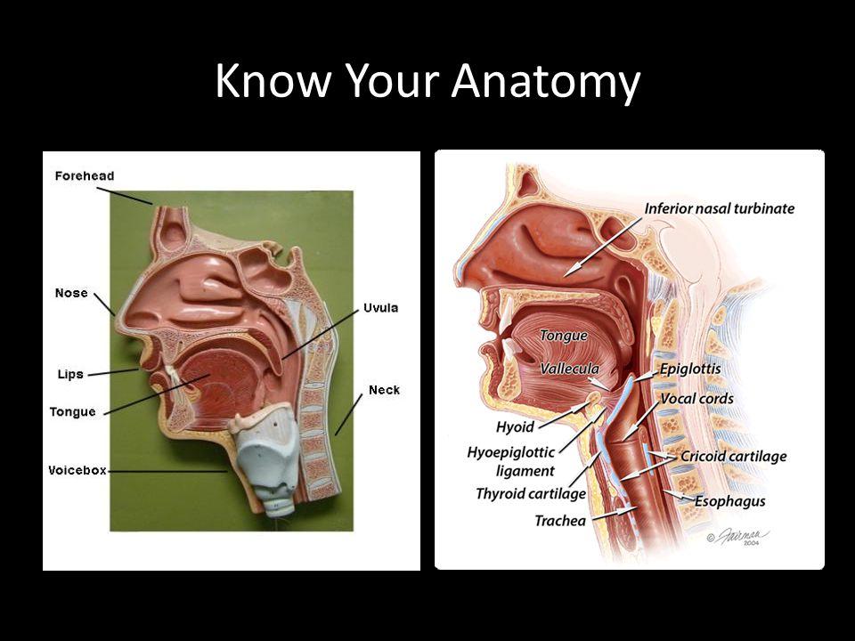 Know Your Anatomy