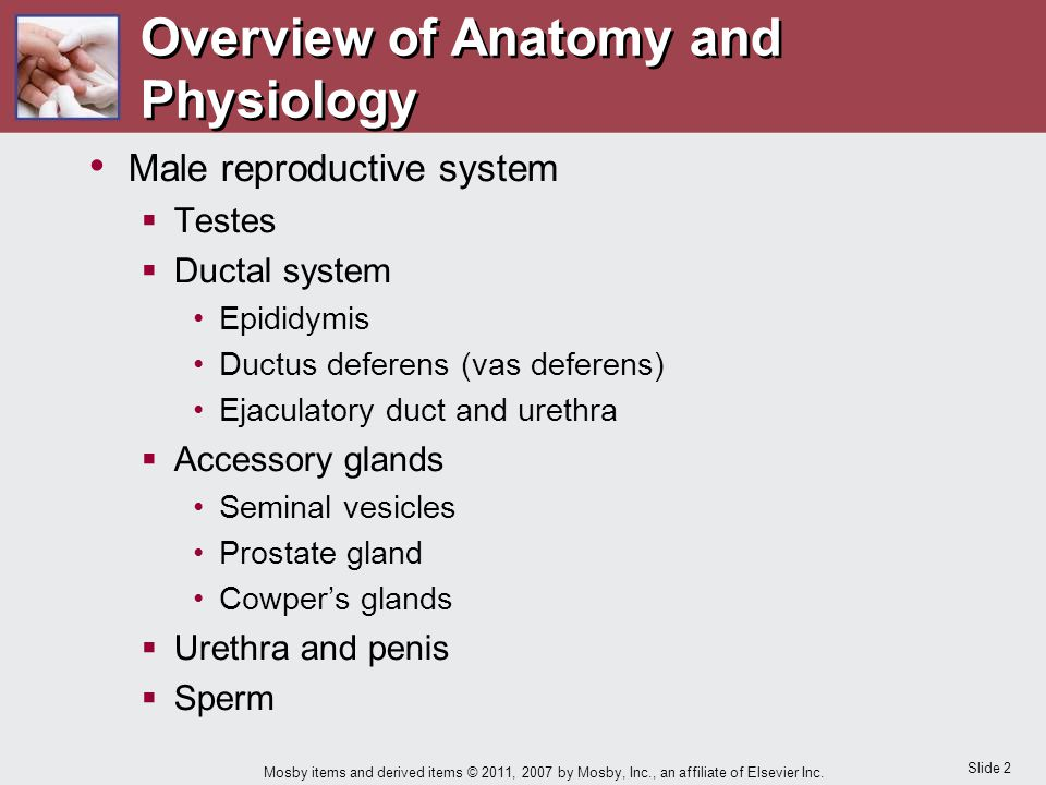 Slide 2 Mosby items and derived items © 2011, 2007 by Mosby, Inc., an affiliate of Elsevier Inc. Overview of Anatomy and Physiology Male reproductive