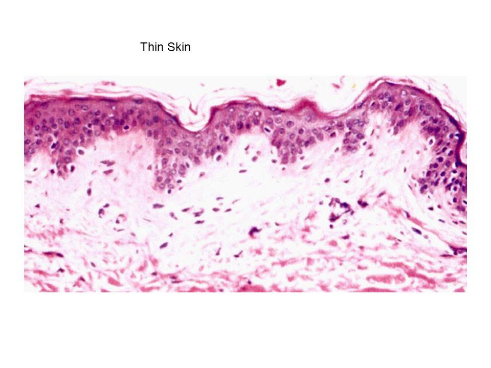 Thin Skin