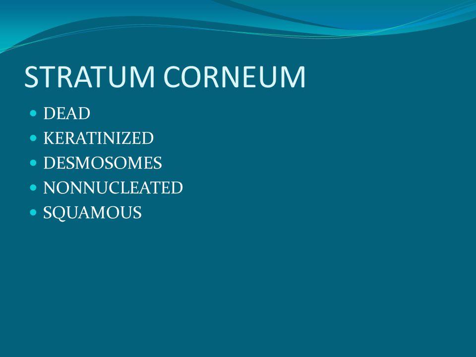 STRATUM CORNEUM DEAD KERATINIZED DESMOSOMES NONNUCLEATED SQUAMOUS