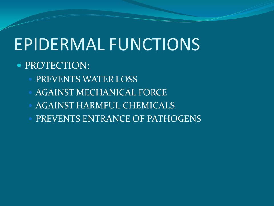 EPIDERMAL FUNCTIONS PROTECTION: PREVENTS WATER LOSS AGAINST MECHANICAL FORCE AGAINST HARMFUL CHEMICALS PREVENTS ENTRANCE OF PATHOGENS