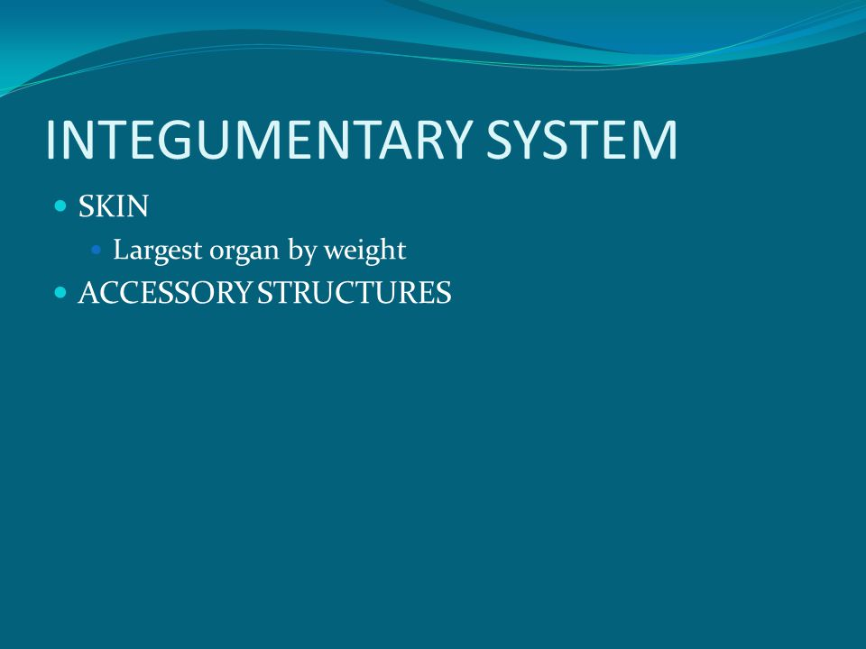 INTEGUMENTARY SYSTEM SKIN Largest organ by weight ACCESSORY STRUCTURES