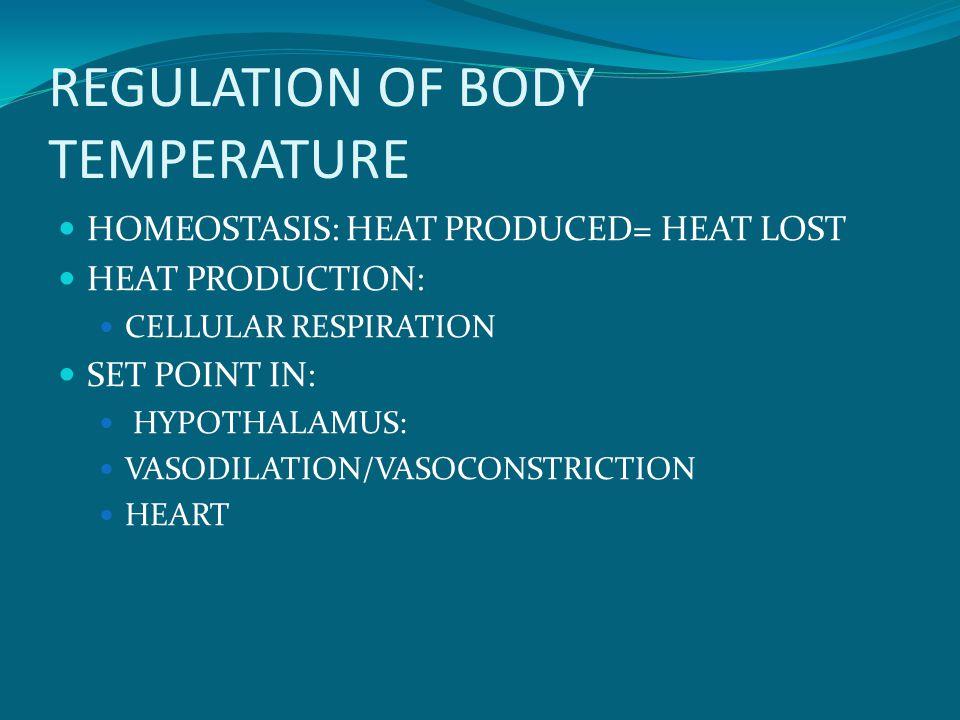 REGULATION OF BODY TEMPERATURE HOMEOSTASIS: HEAT PRODUCED= HEAT LOST HEAT PRODUCTION: CELLULAR RESPIRATION SET POINT IN: HYPOTHALAMUS: VASODILATION/VASOCONSTRICTION HEART