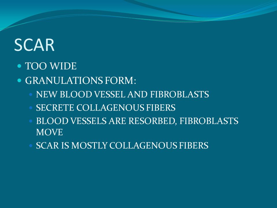 SCAR TOO WIDE GRANULATIONS FORM: NEW BLOOD VESSEL AND FIBROBLASTS SECRETE COLLAGENOUS FIBERS BLOOD VESSELS ARE RESORBED, FIBROBLASTS MOVE SCAR IS MOSTLY COLLAGENOUS FIBERS
