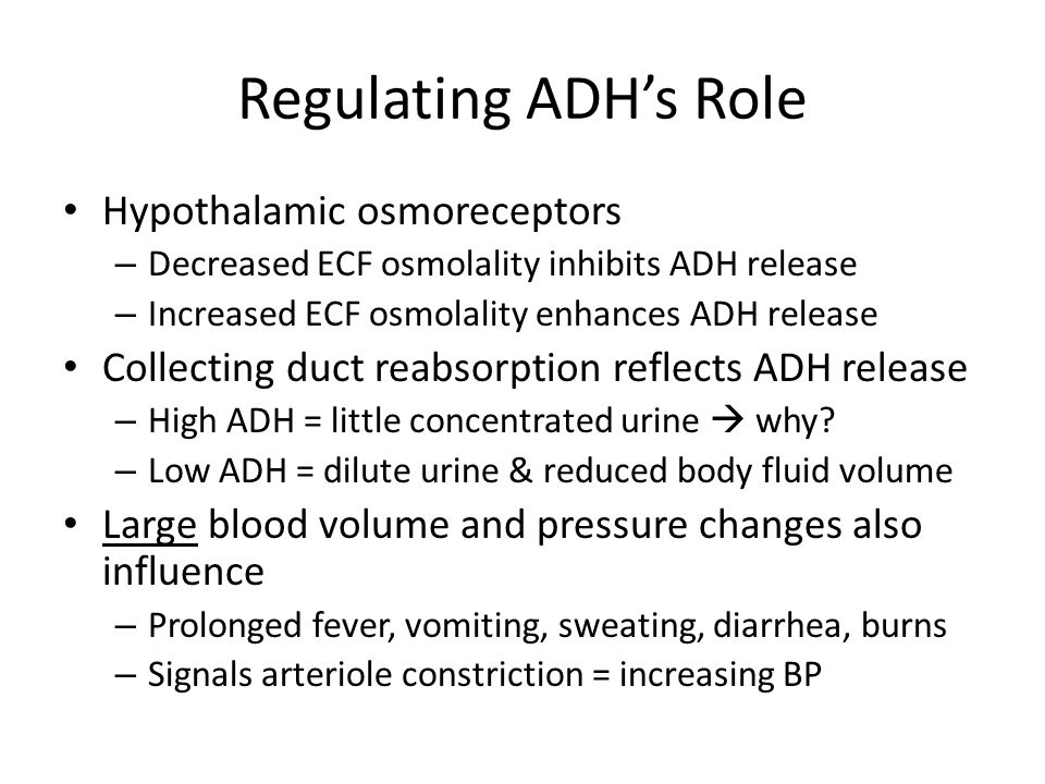 Regulating ADH's Role Hypothalamic osmoreceptors – Decreased ECF osmolality inhibits ADH release – Increased ECF osmolality enhances ADH release Collecting duct reabsorption reflects ADH release – High ADH = little concentrated urine  why.