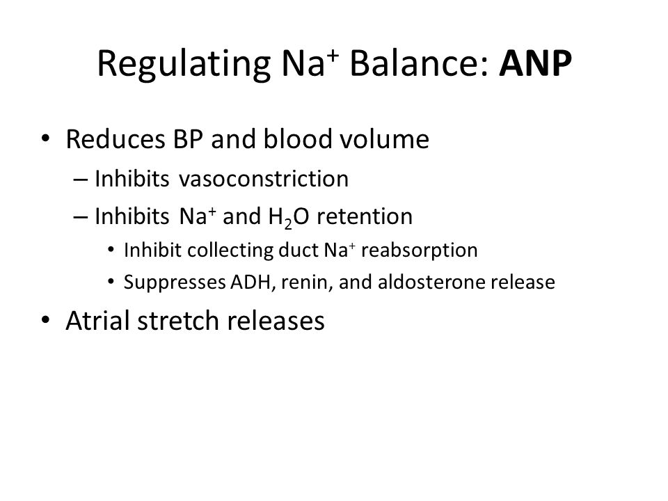 Regulating Na + Balance: ANP Reduces BP and blood volume – Inhibits vasoconstriction – Inhibits Na + and H 2 O retention Inhibit collecting duct Na + reabsorption Suppresses ADH, renin, and aldosterone release Atrial stretch releases
