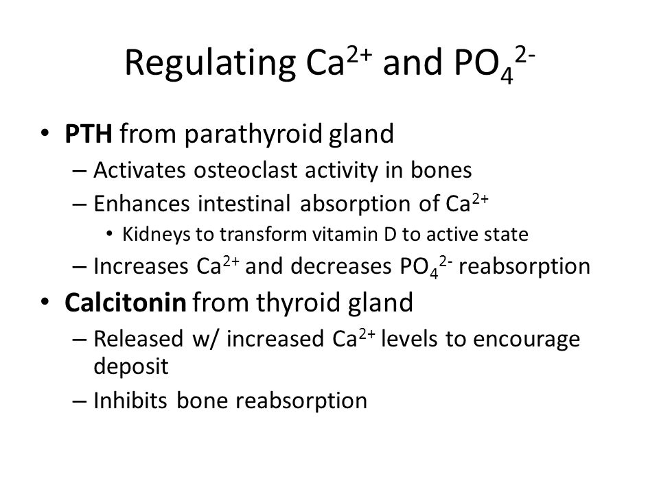 Regulating Ca 2+ and PO 4 2- PTH from parathyroid gland – Activates osteoclast activity in bones – Enhances intestinal absorption of Ca 2+ Kidneys to transform vitamin D to active state – Increases Ca 2+ and decreases PO 4 2- reabsorption Calcitonin from thyroid gland – Released w/ increased Ca 2+ levels to encourage deposit – Inhibits bone reabsorption