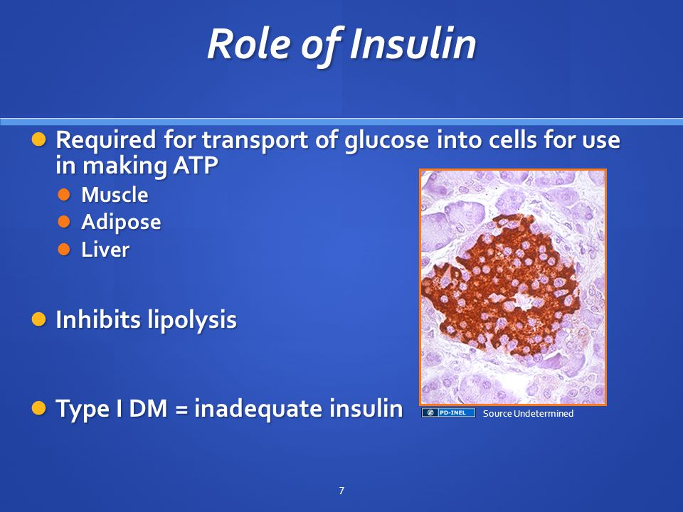 Role of Insulin Required for transport of glucose into cells for use in making ATP Required for transport of glucose into cells for use in making ATP Muscle Muscle Adipose Adipose Liver Liver Inhibits lipolysis Inhibits lipolysis Type I DM = inadequate insulin Type I DM = inadequate insulin 7 Source Undetermined