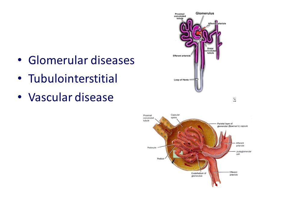 Glomerular diseases Tubulointerstitial Vascular disease