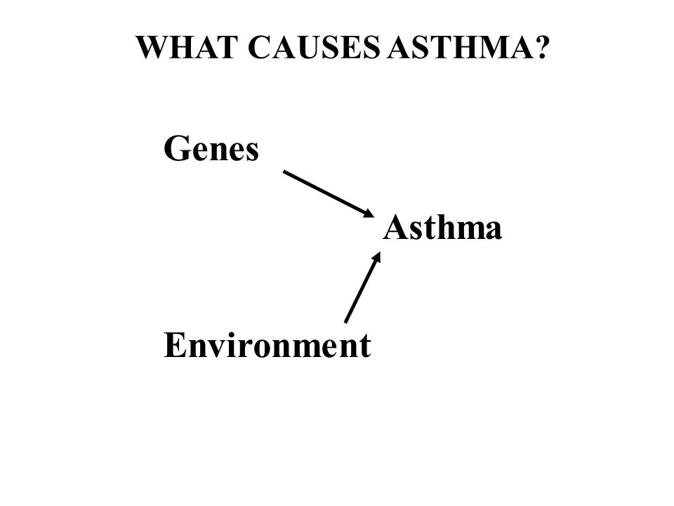 Genes Environment Asthma WHAT CAUSES ASTHMA