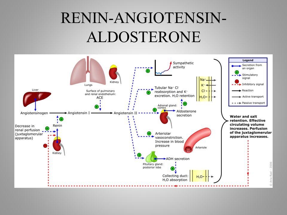 RENIN-ANGIOTENSIN- ALDOSTERONE