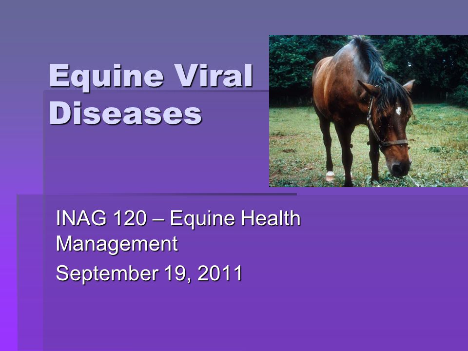 Equine Influenza  Symptoms:  Harsh, dry cough  Loss of appetite  Depression  Watery nasal discharge  Can lead to pneumonia!