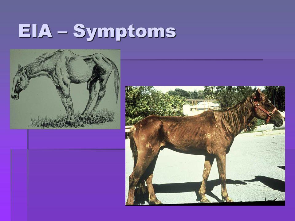 EIA – Symptoms