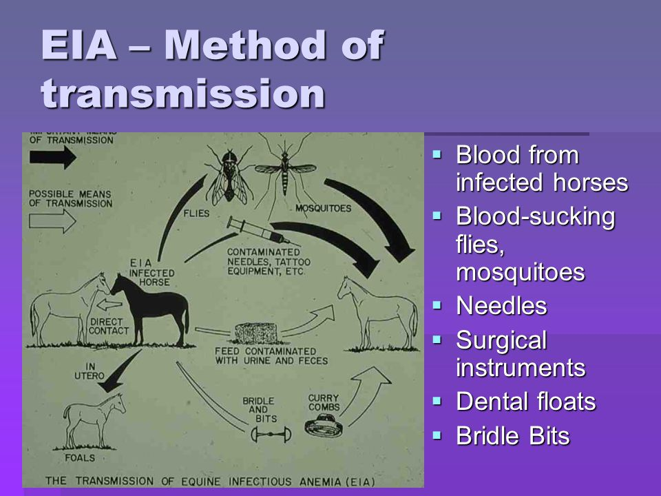 EIA – Method of transmission  Blood from infected horses  Blood-sucking flies, mosquitoes  Needles  Surgical instruments  Dental floats  Bridle Bits