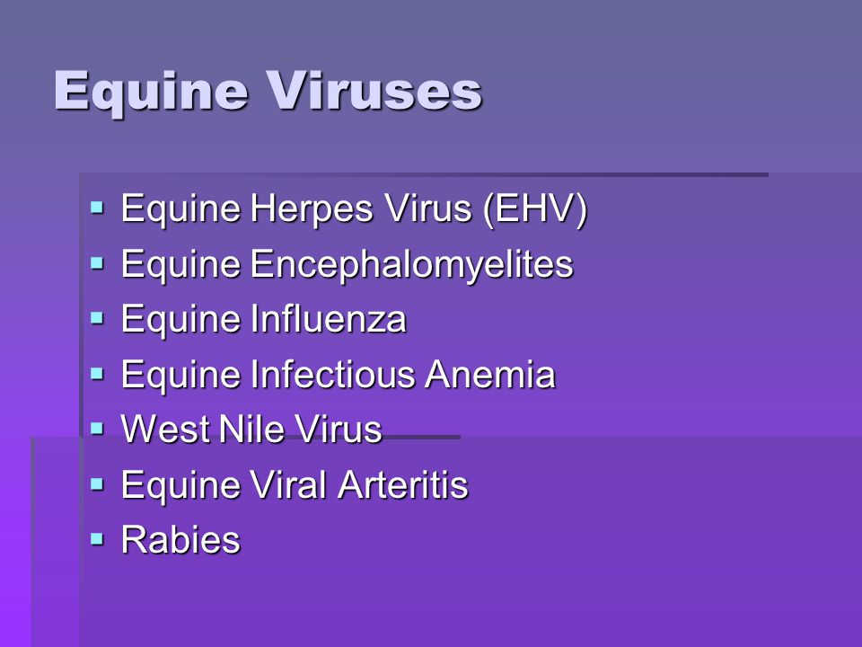Equine Herpes Virus  Species Specific  Three Subfamilies: alpha, beta, gamma  9 documented strains, but only 5 affect domestic horses  EHV-1 (  )  Subtype 1  Rhinopneumonitis (respiratory form)  Abortion  Birth of weak foals  Peracute vasculitis  Neurological