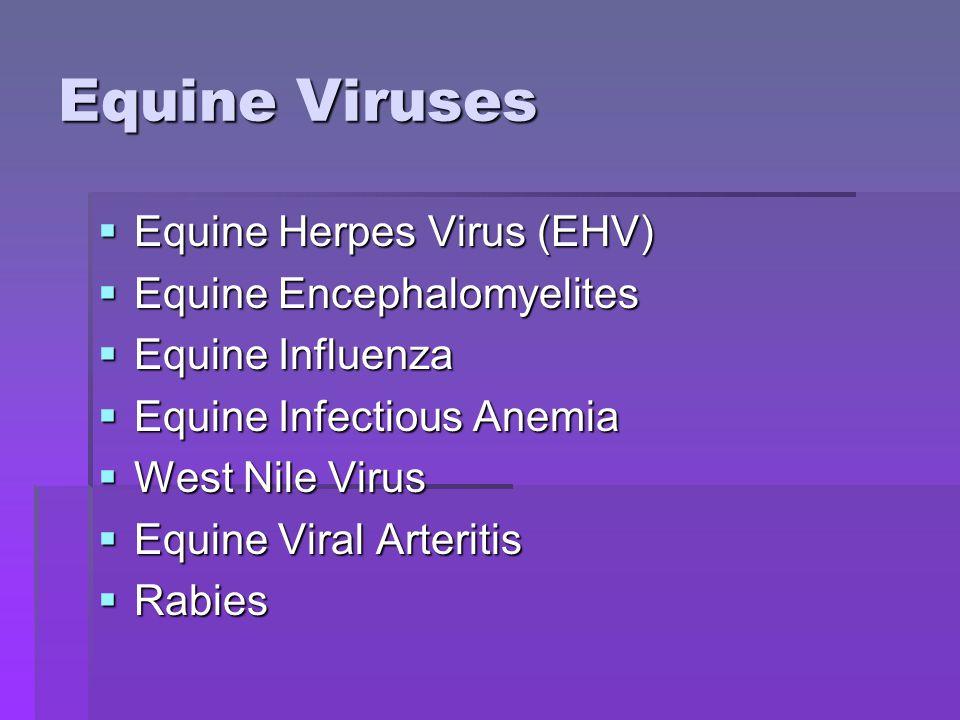 Equine Viruses  Equine Herpes Virus (EHV)  Equine Encephalomyelites  Equine Influenza  Equine Infectious Anemia  West Nile Virus  Equine Viral Arteritis  Rabies