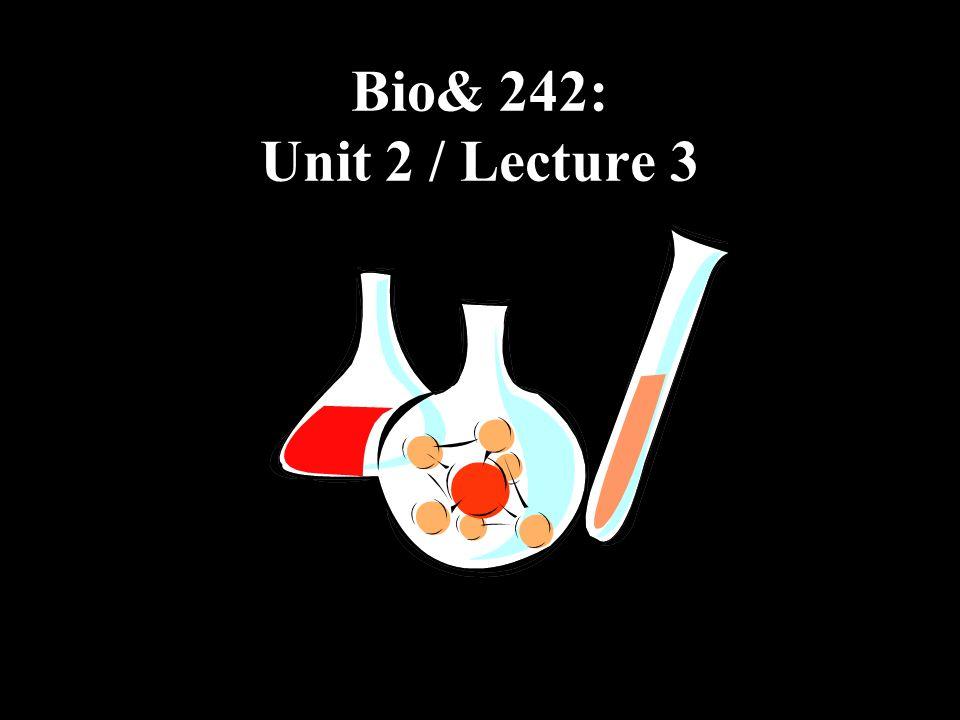 Bio& 242: Unit 2 / Lecture 3