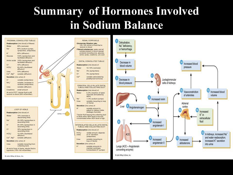 Summary of Hormones Involved in Sodium Balance