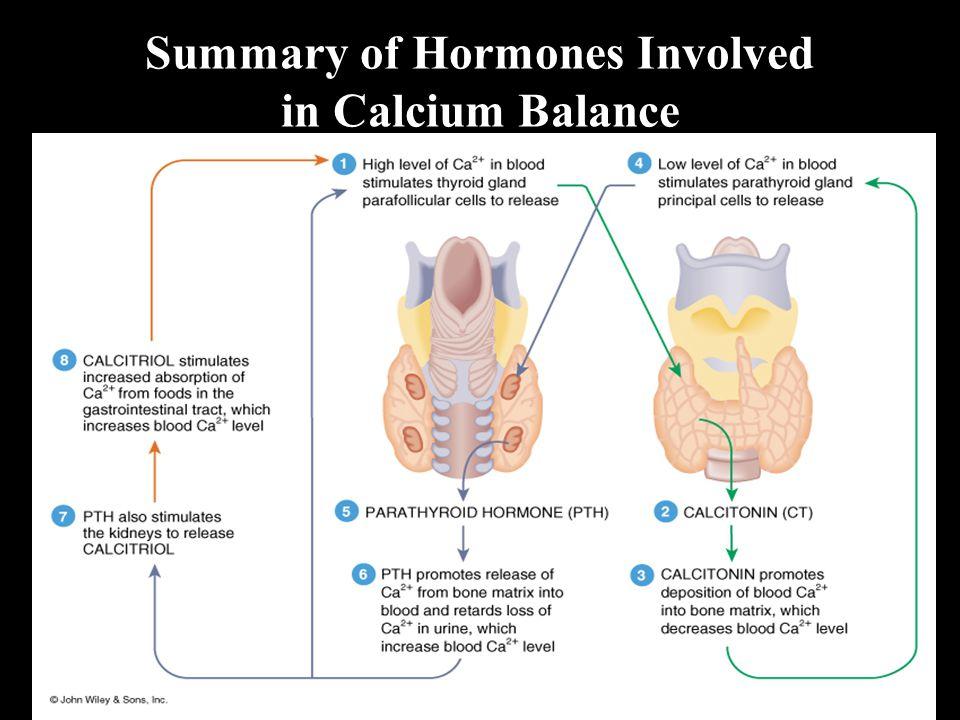 Summary of Hormones Involved in Calcium Balance