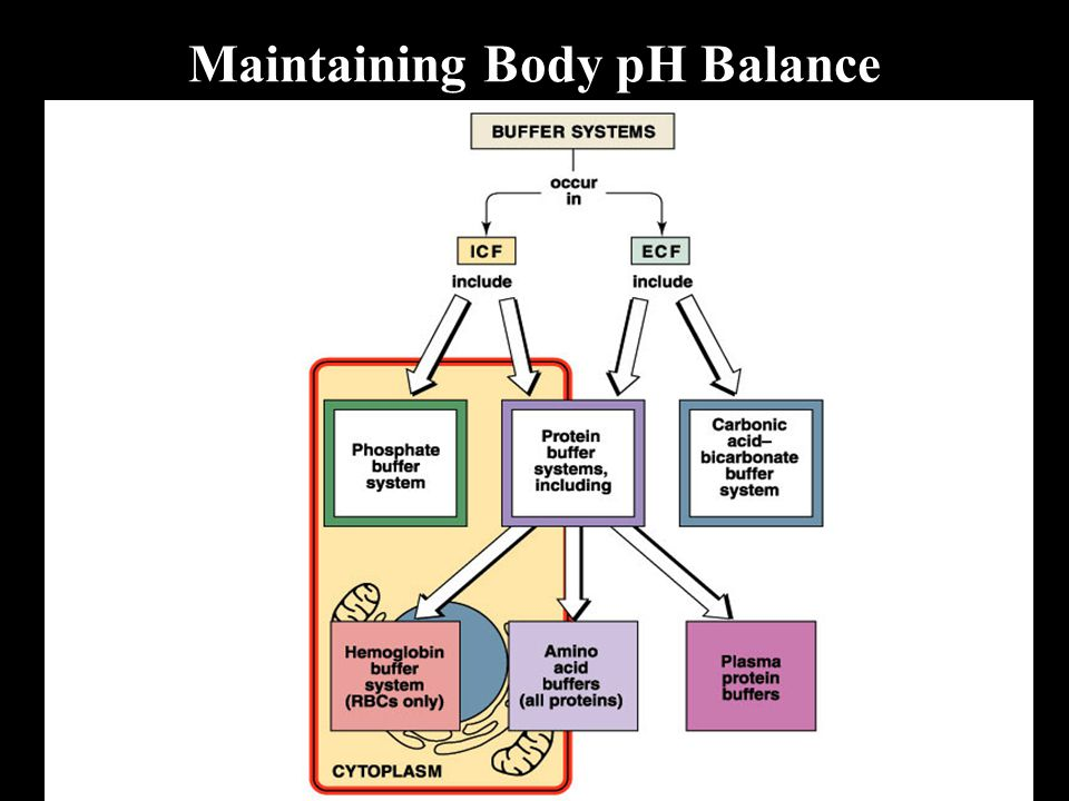 Maintaining Body pH Balance