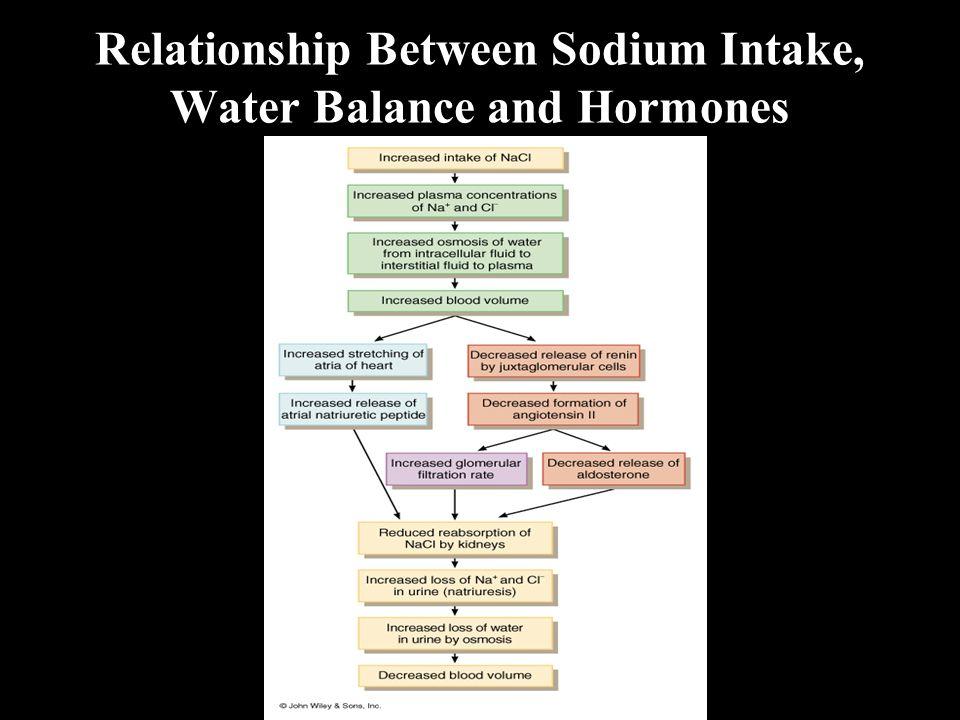 Relationship Between Sodium Intake, Water Balance and Hormones