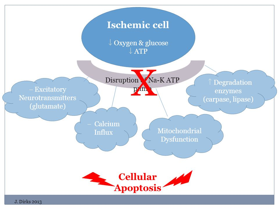 Ischemic cell  Oxygen & glucose  ATP Disruption of Na-K ATP pump  Excitatory Neurotransmitters (glutamate)  Calcium Influx  Degradation enzymes (carpase, lipase) Cellular Apoptosis Mitochondrial Dysfunction X J.