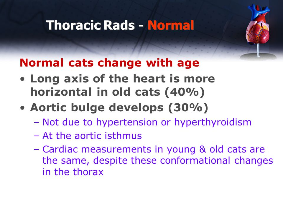 Normal cats change with age Long axis of the heart is more horizontal in old cats (40%) Aortic bulge develops (30%) –Not due to hypertension or hypert