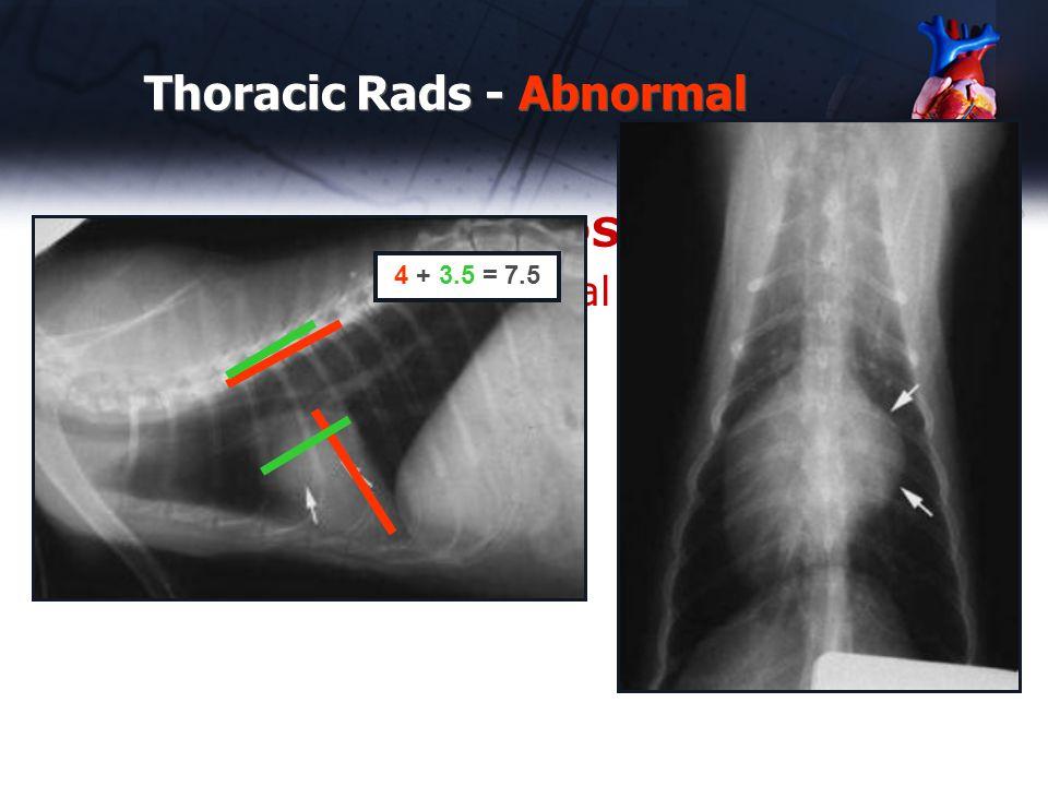Case #5 – 4 year old DSH - Murmur heard on annual – left sternum Thoracic Rads - Abnormal 4 + 3.5 = 7.5