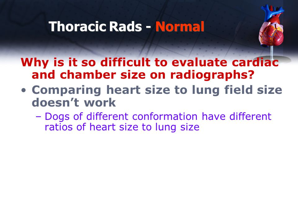 Measuring RV enlargement on Lateral View of the Thorax Thoracic Rads - Abnormal 3.75 / 1 = 3.75