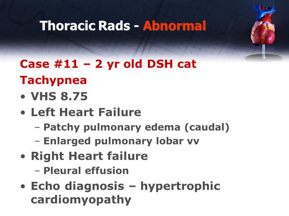 Thoracic Rads - Abnormal Case #11 – 2 yr old DSH cat Tachypnea VHS 8.75 Left Heart Failure –Patchy pulmonary edema (caudal) –Enlarged pulmonary lobar