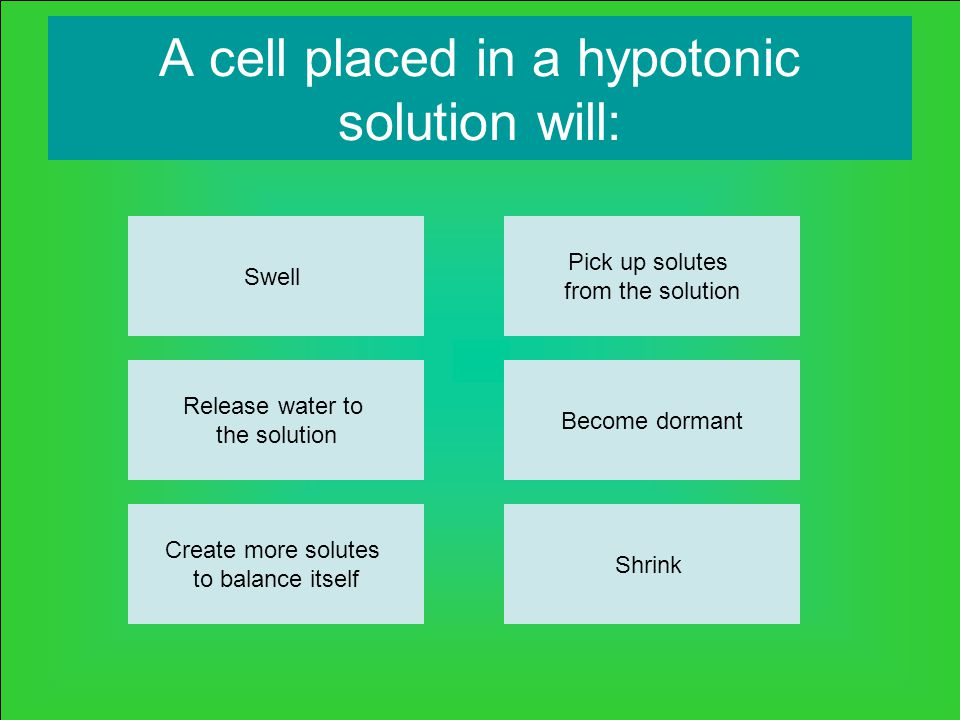 A cell placed in a hypotonic solution will: Swell Release water to the solution Create more solutes to balance itself Shrink Become dormant Pick up solutes from the solution