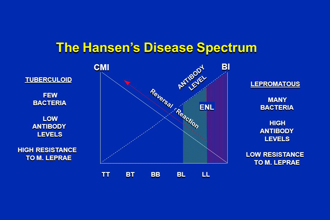 The Hansen's Disease Spectrum LEPROMATOUS MANY BACTERIA ANTIBODY LEVELS HIGH LOW RESISTANCE TO M.