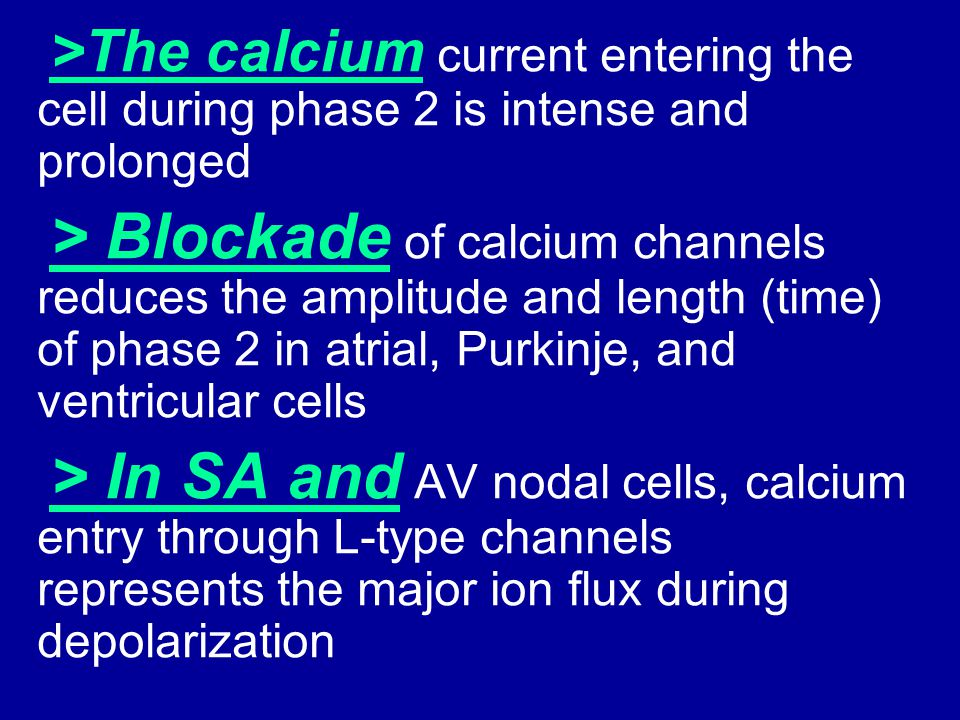 >The calcium current entering the cell during phase 2 is intense and prolonged > Blockade of calcium channels reduces the amplitude and length (time)
